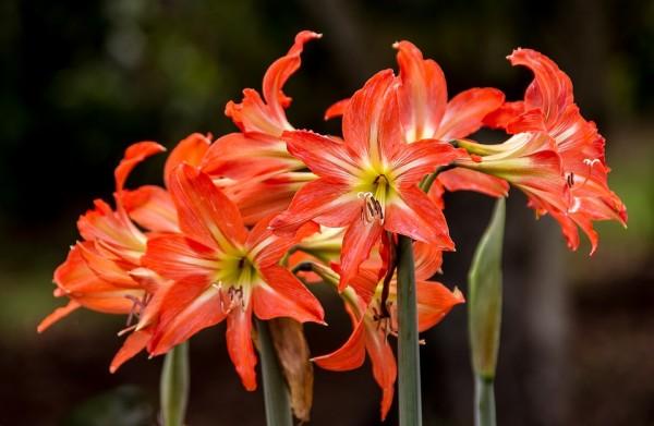 flowers-1095770_960_720